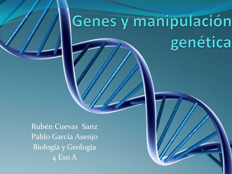Rubén Cuevas Sanz Pablo García Asenjo Biología y Geología 4 Eso A