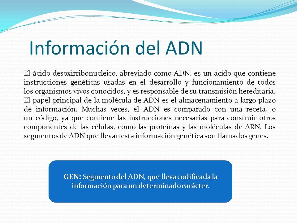 Información del ADN El ácido desoxirribonucleico, abreviado como ADN, es un ácido que contiene instrucciones genéticas usadas en el desarrollo y funci