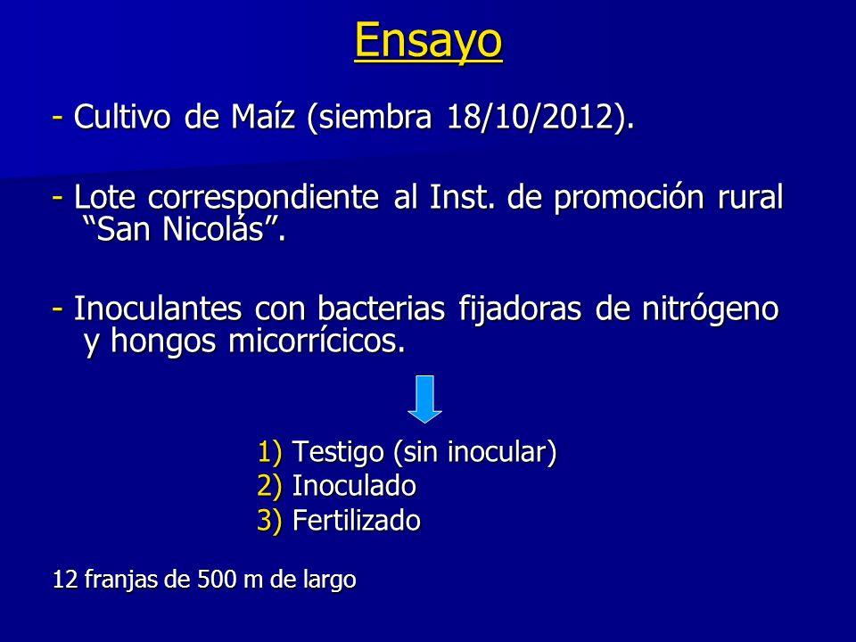 Ensayo - Cultivo de Maíz (siembra 18/10/2012). - Lote correspondiente al Inst. de promoción rural San Nicolás. - Inoculantes con bacterias fijadoras d