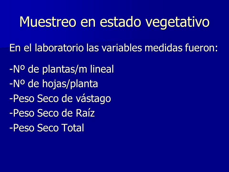Muestreo en estado vegetativo En el laboratorio las variables medidas fueron: -Nº de plantas/m lineal -Nº de hojas/planta -Peso Seco de vástago -Peso