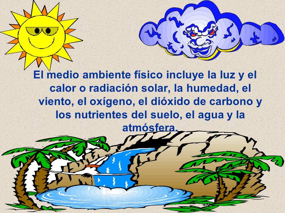 El medio ambiente físico incluye la luz y el calor o radiación solar, la humedad, el viento, el oxígeno, el dióxido de carbono y los nutrientes del su
