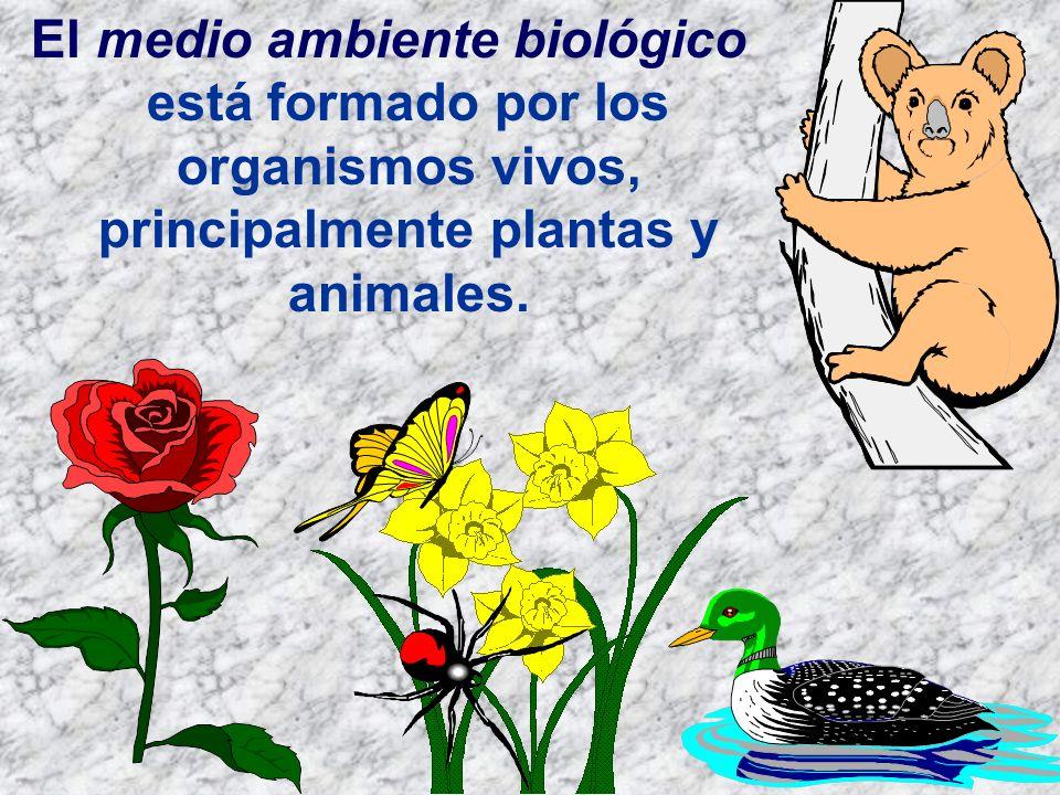 El medio ambiente biológico está formado por los organismos vivos, principalmente plantas y animales.