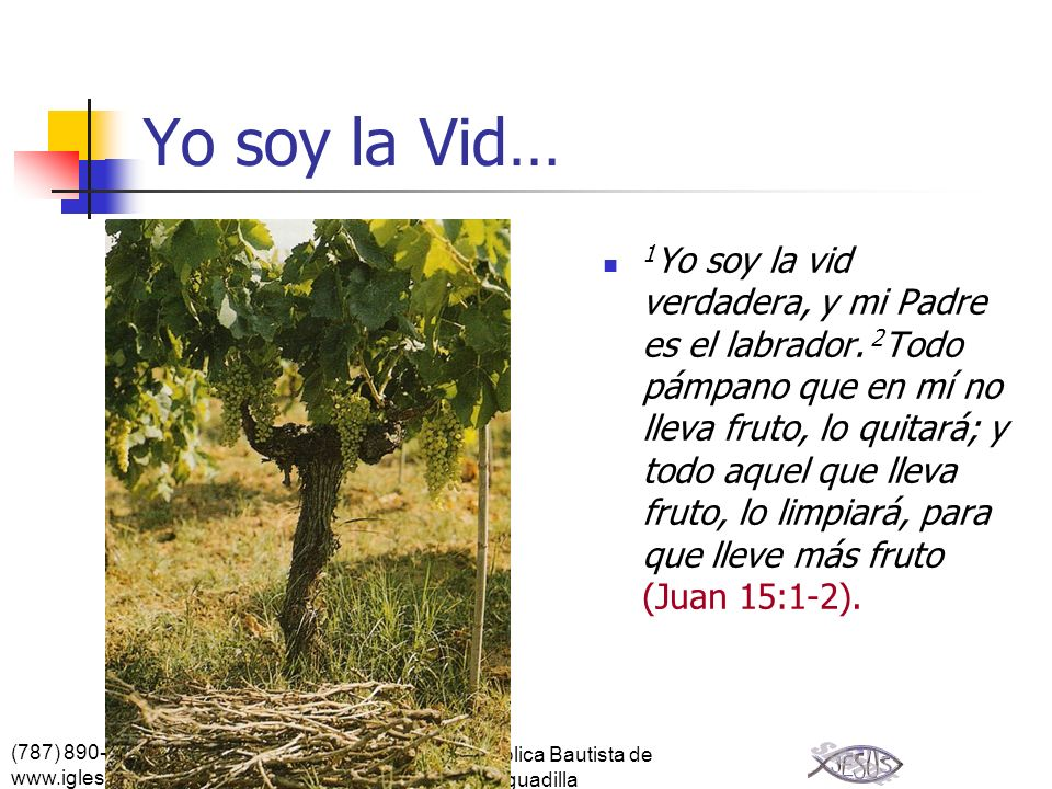 (787) 890-0118 www.iglesiabiblicabautista.org Iglesia Bíblica Bautista de Aguadilla Yo soy la Vid… 1 Yo soy la vid verdadera, y mi Padre es el labrado