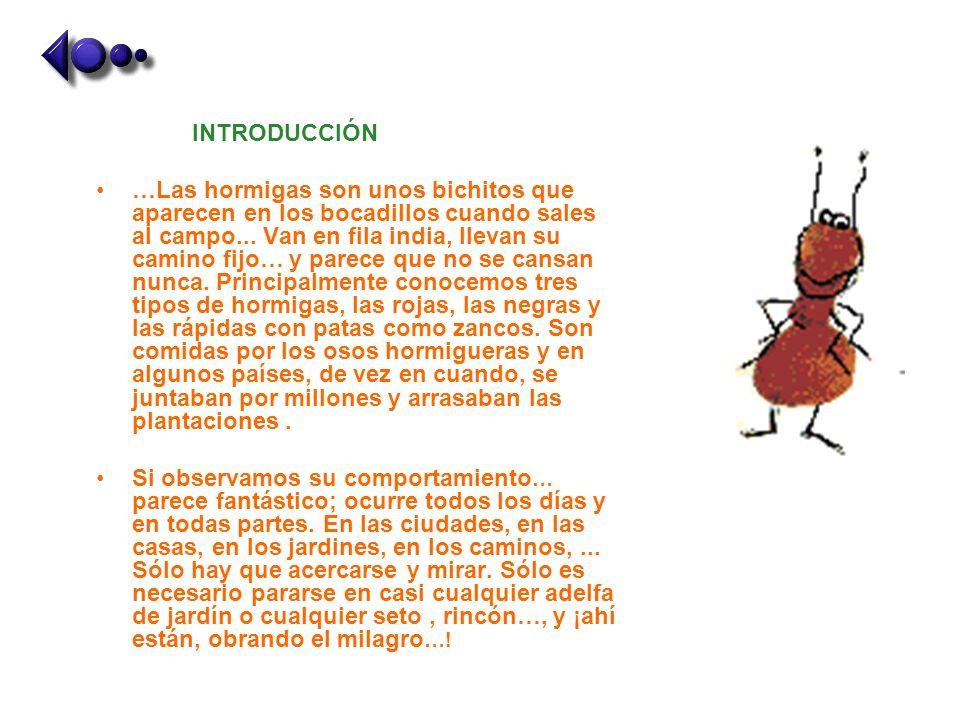 INTRODUCCIÓN …Las hormigas son unos bichitos que aparecen en los bocadillos cuando sales al campo... Van en fila india, llevan su camino fijo… y parec