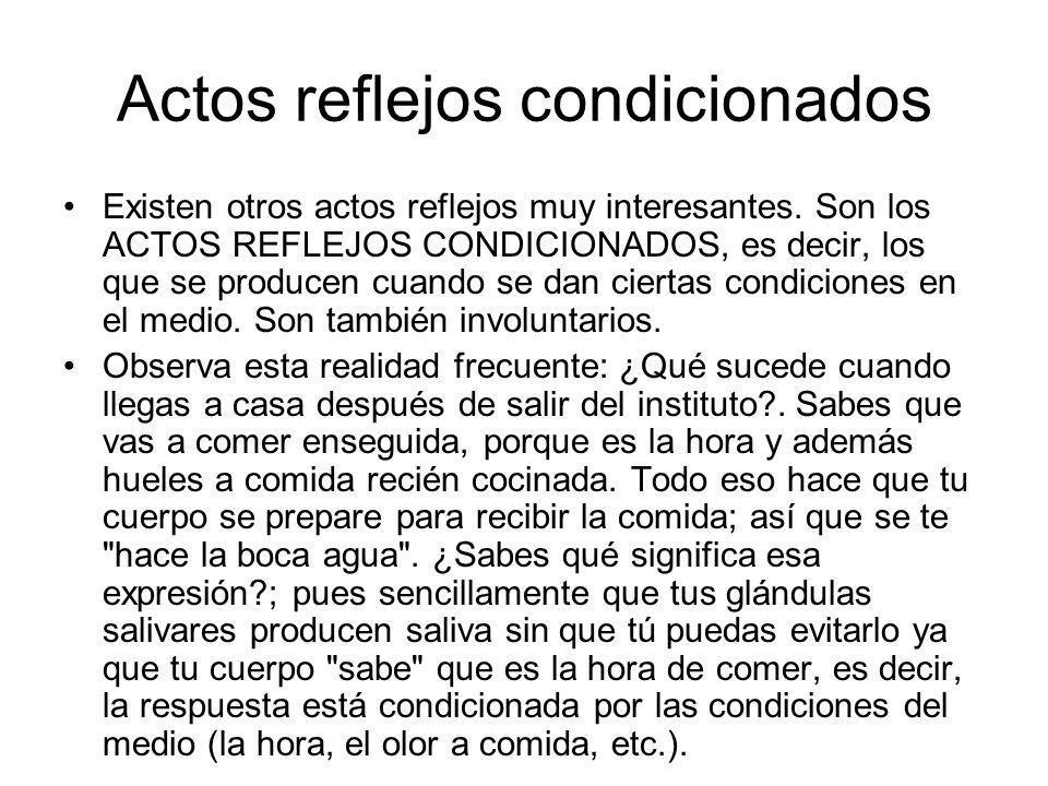 Actos reflejos condicionados Existen otros actos reflejos muy interesantes. Son los ACTOS REFLEJOS CONDICIONADOS, es decir, los que se producen cuando