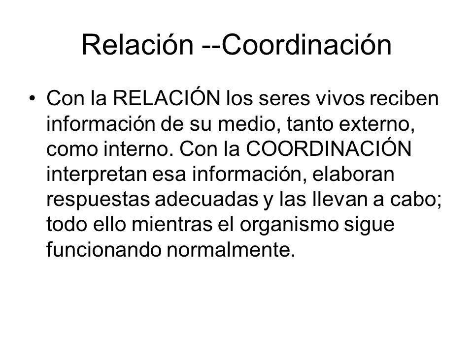 Relación --Coordinación Con la RELACIÓN los seres vivos reciben información de su medio, tanto externo, como interno. Con la COORDINACIÓN interpretan