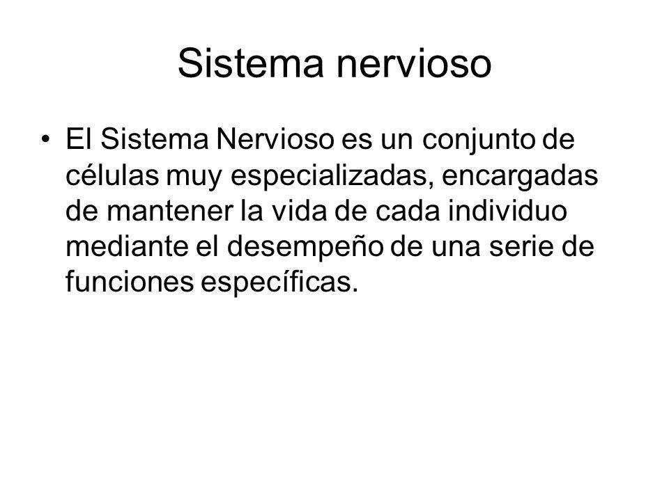 Sistema nervioso El Sistema Nervioso es un conjunto de células muy especializadas, encargadas de mantener la vida de cada individuo mediante el desemp