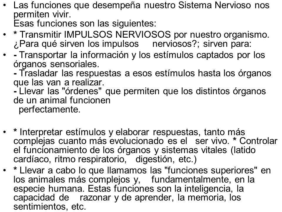 Las funciones que desempeña nuestro Sistema Nervioso nos permiten vivir. Esas funciones son las siguientes: * Transmitir IMPULSOS NERVIOSOS por nuestr