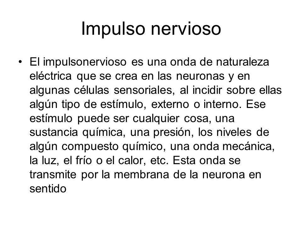 Impulso nervioso El impulsonervioso es una onda de naturaleza eléctrica que se crea en las neuronas y en algunas células sensoriales, al incidir sobre