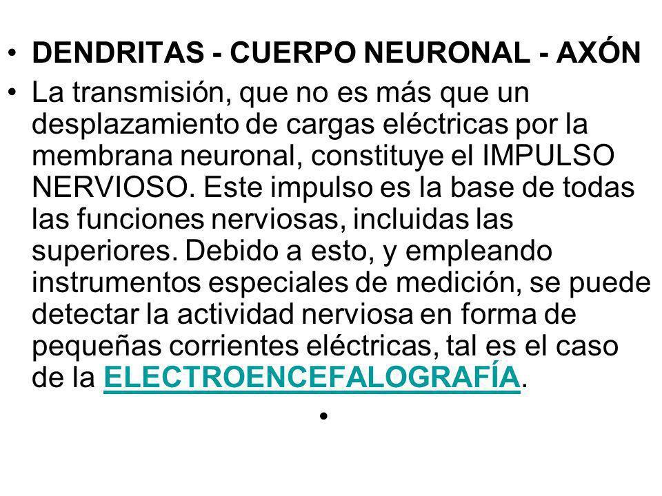 DENDRITAS - CUERPO NEURONAL - AXÓN La transmisión, que no es más que un desplazamiento de cargas eléctricas por la membrana neuronal, constituye el IM
