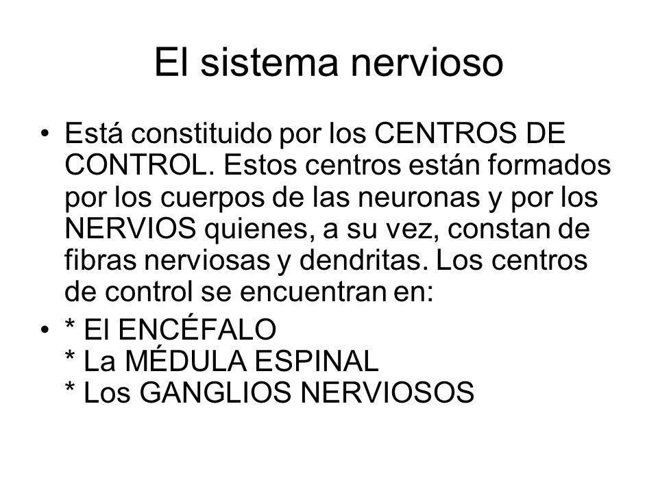 El sistema nervioso Está constituido por los CENTROS DE CONTROL. Estos centros están formados por los cuerpos de las neuronas y por los NERVIOS quiene