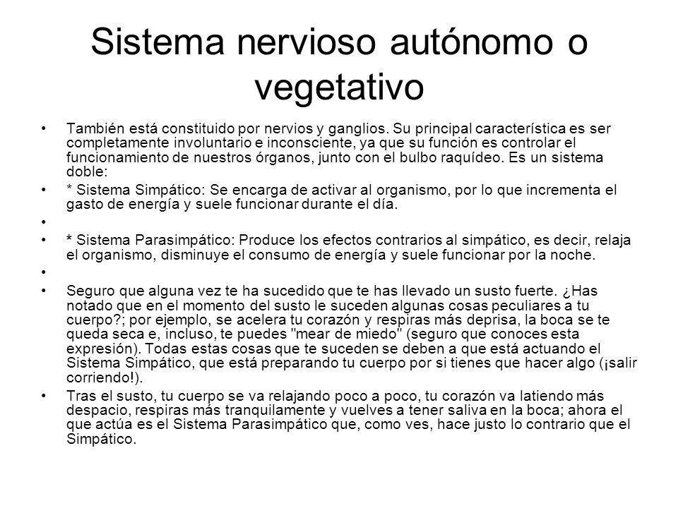 Sistema nervioso autónomo o vegetativo También está constituido por nervios y ganglios. Su principal característica es ser completamente involuntario