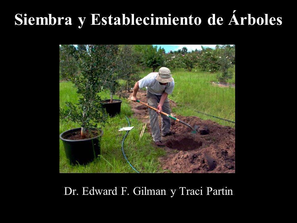 Siembra y Establecimiento de Árboles Dr. Edward F. Gilman y Traci Partin