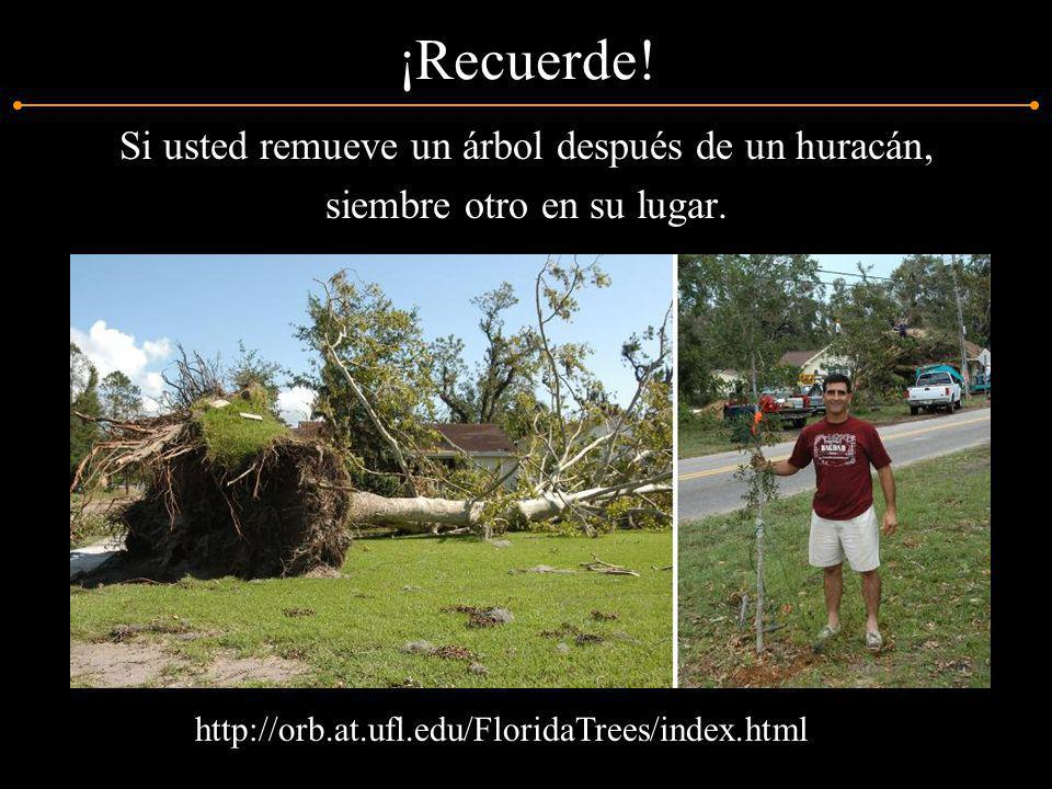 ¡Recuerde! Si usted remueve un árbol después de un huracán, siembre otro en su lugar. http://orb.at.ufl.edu/FloridaTrees/index.html