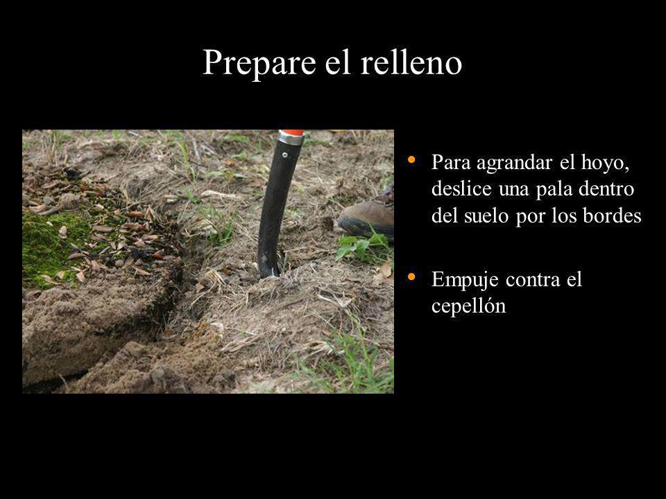 Prepare el relleno Para agrandar el hoyo, deslice una pala dentro del suelo por los bordes Empuje contra el cepellón