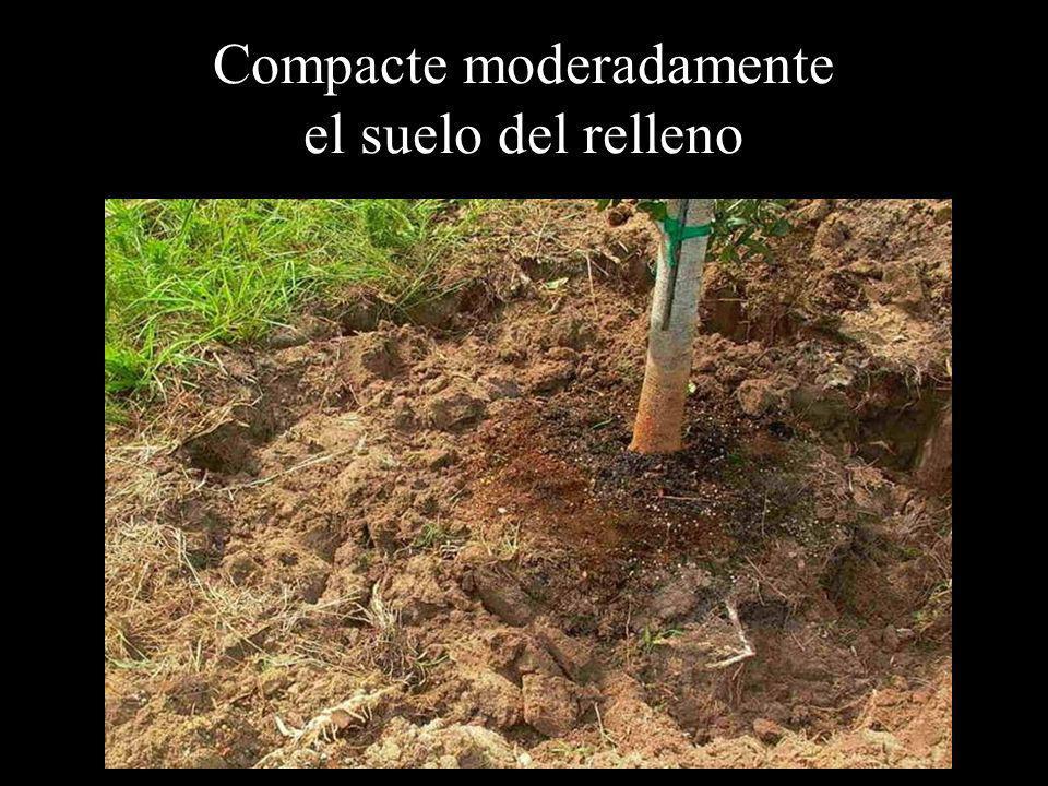 Compacte moderadamente el suelo del relleno