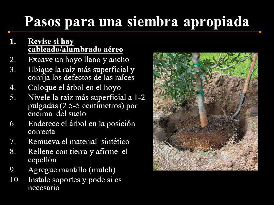 Defectos en la superficie Remueva la tierra de la superficie del cepellón y corte las raíces circulares y cruzadas