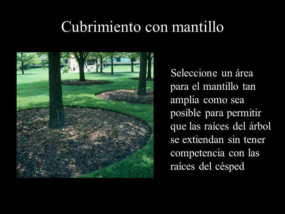 Cubrimiento con mantillo Seleccione un área para el mantillo tan amplia como sea posible para permitir que las raíces del árbol se extiendan sin tener
