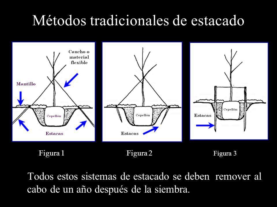 Métodos tradicionales de estacado Todos estos sistemas de estacado se deben remover al cabo de un año después de la siembra. Figura 1 Figura 3 Figura