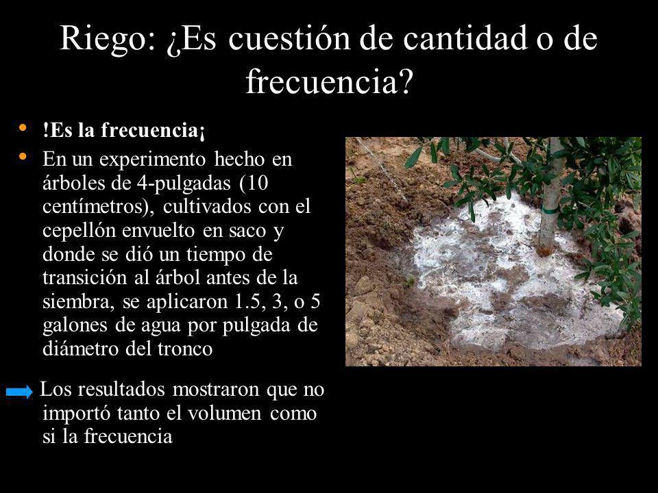 Riego: ¿Es cuestión de cantidad o de frecuencia? !Es la frecuencia¡ En un experimento hecho en árboles de 4-pulgadas (10 centímetros), cultivados con