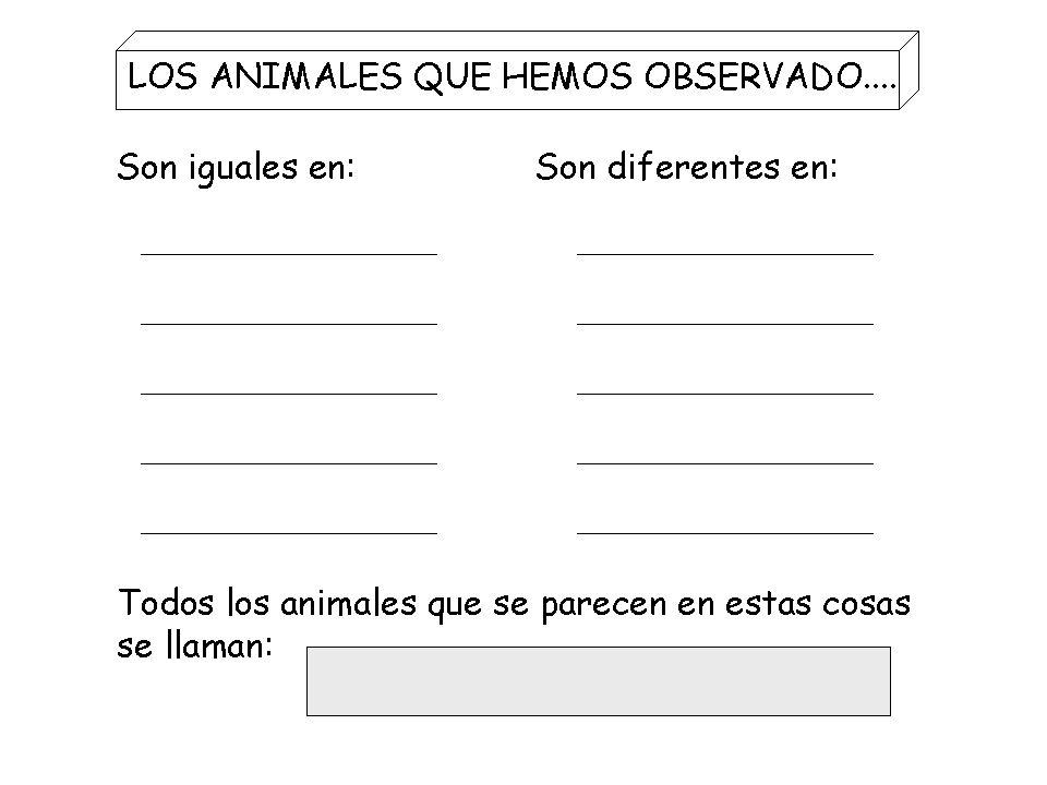 SU PIEL PARTES CUERPO ESQUELETO TAMAÑO DÓNDE VIVE CÓMO NACE QUÉ COME AL NACER QUÉ COME CÓMO RESPIRA CÓMO SE MUEVE ANIMALES QUE SERÁN OBSERVADOS ASPECT