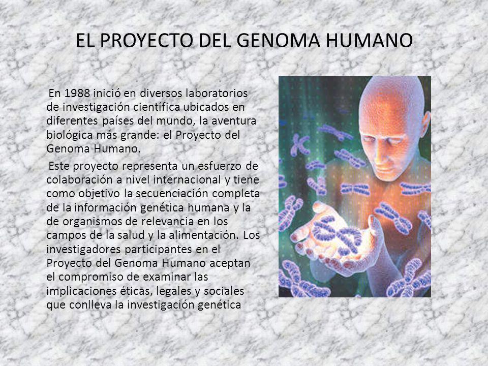EL PROYECTO DEL GENOMA HUMANO En 1988 inició en diversos laboratorios de investigación científica ubicados en diferentes países del mundo, la aventura