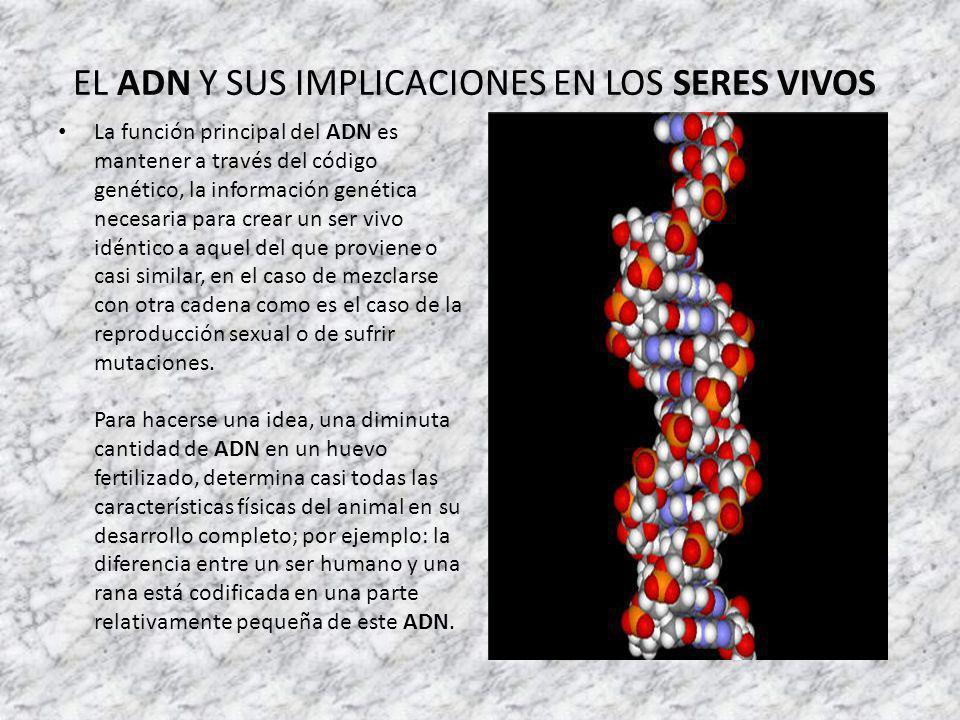 EL ADN Y SUS IMPLICACIONES EN LOS SERES VIVOS La función principal del ADN es mantener a través del código genético, la información genética necesaria