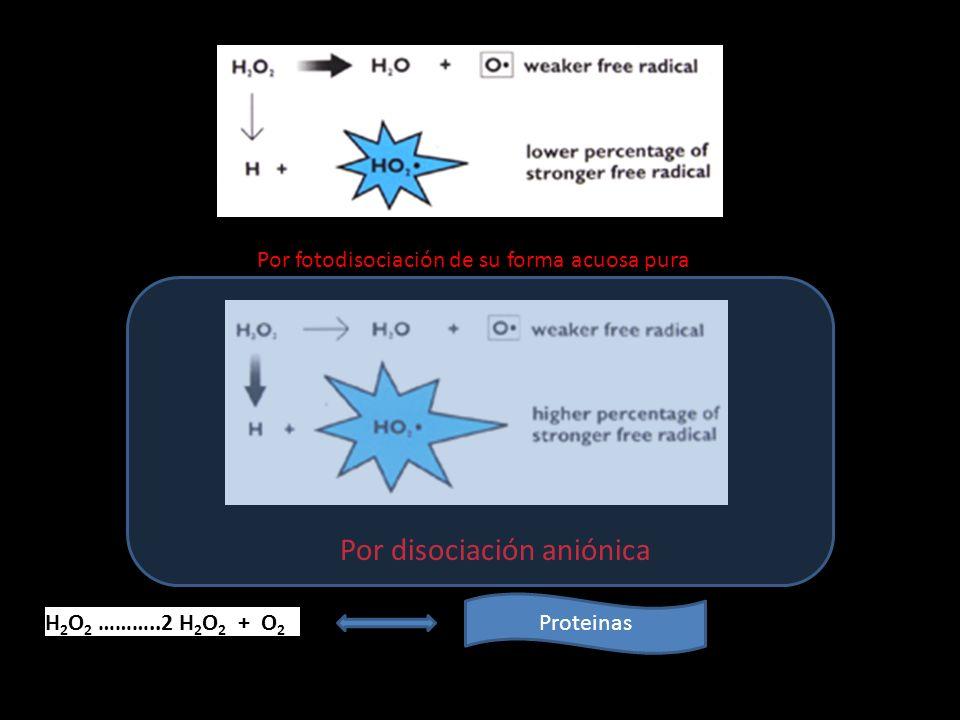 Por fotodisociación de su forma acuosa pura Por disociación aniónica H 2 O 2 ………..2 H 2 O 2 + O 2 Proteinas