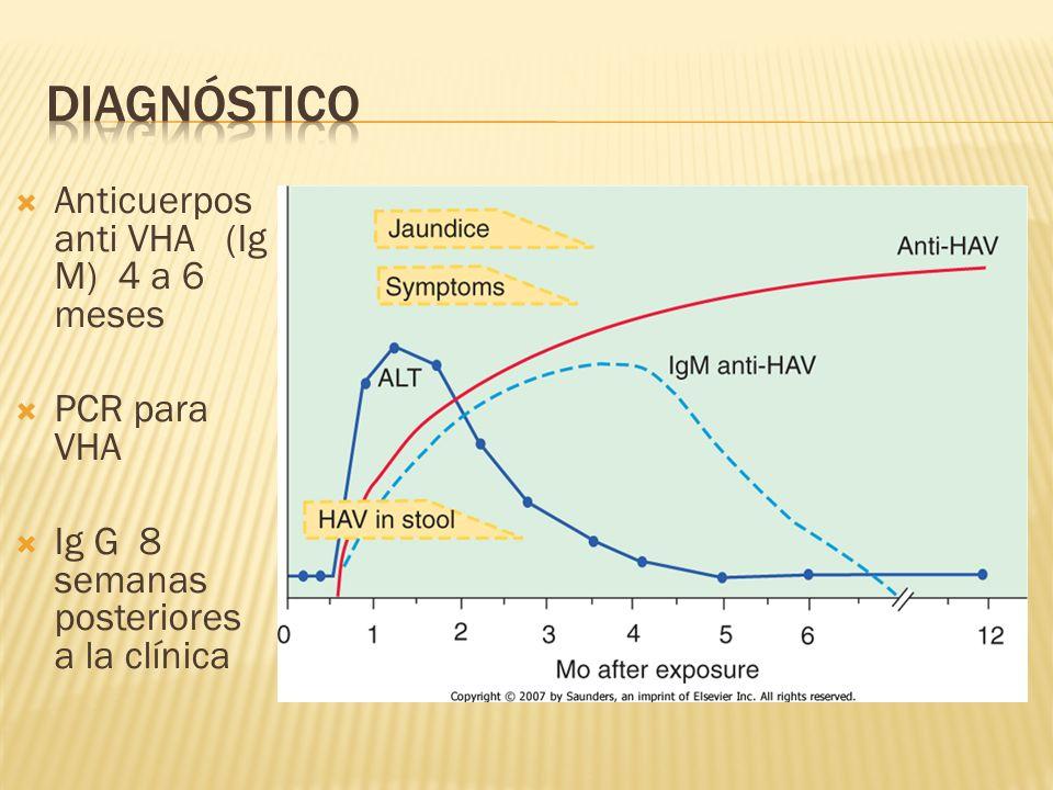 Anticuerpos anti VHA (Ig M) 4 a 6 meses PCR para VHA Ig G 8 semanas posteriores a la clínica