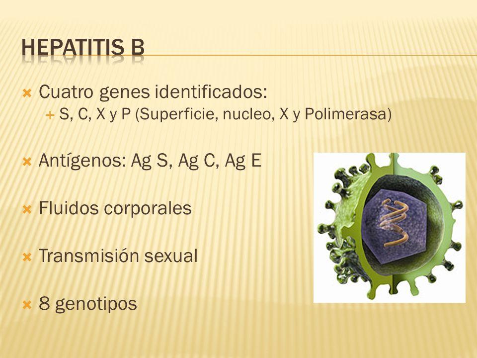 Cuatro genes identificados: S, C, X y P (Superficie, nucleo, X y Polimerasa) Antígenos: Ag S, Ag C, Ag E Fluidos corporales Transmisión sexual 8 genot