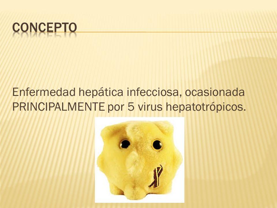 Virus de la hepatitis: VHA VHB VHC VHD VHE Virus de Hepatitis G VHG Virus Transmisible por transfusiones VTT