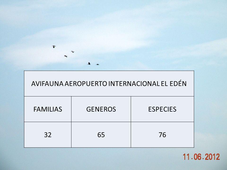 AVIFAUNA AEROPUERTO INTERNACIONAL EL EDÉN FAMILIASGENEROSESPECIES 326576