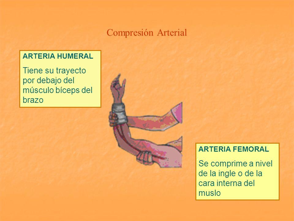 Compresión Arterial ARTERIA HUMERAL Tiene su trayecto por debajo del músculo bíceps del brazo ARTERIA FEMORAL Se comprime a nivel de la ingle o de la