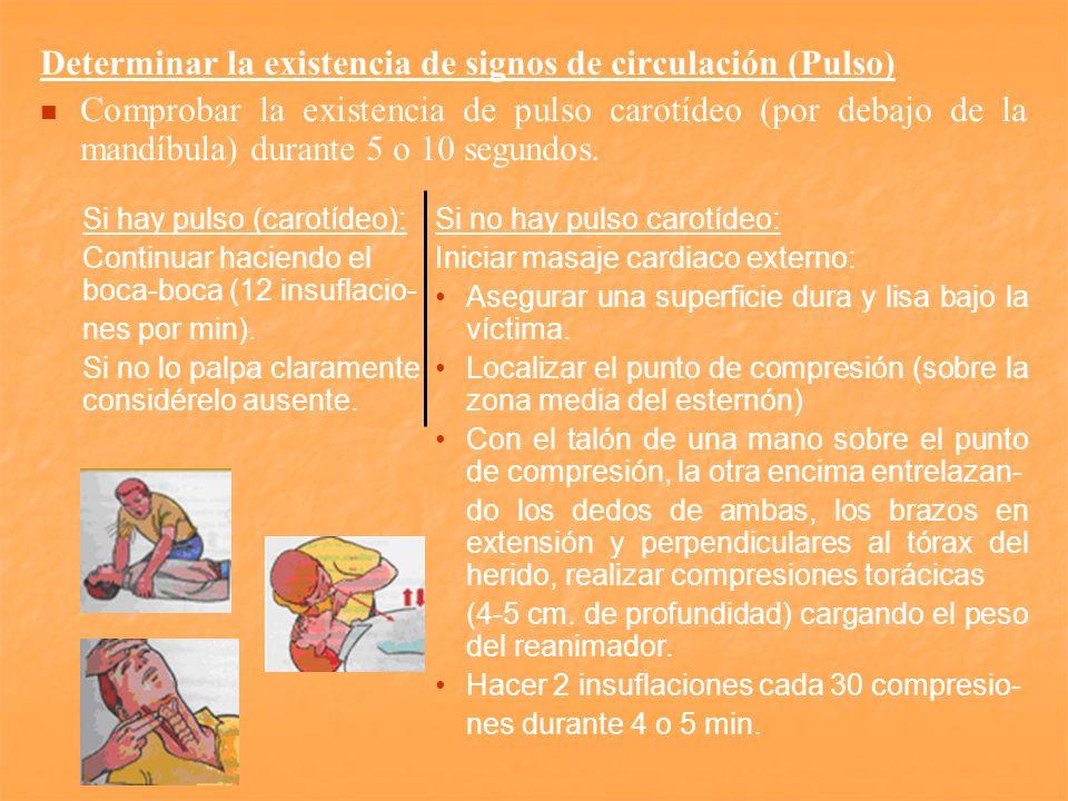 Determinar la existencia de signos de circulación (Pulso) Comprobar la existencia de pulso carotídeo (por debajo de la mandíbula) durante 5 o 10 segun