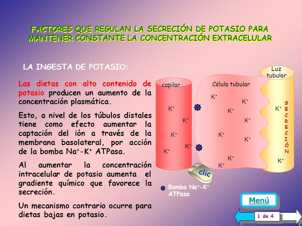 TRANSPORTE DE POTASIO EN EL TUBULO DISTAL Y COLECTOR CORTICAL...... En el nefrón distal ocurre tanto reabsorción como secreción de potasio, ambos proc