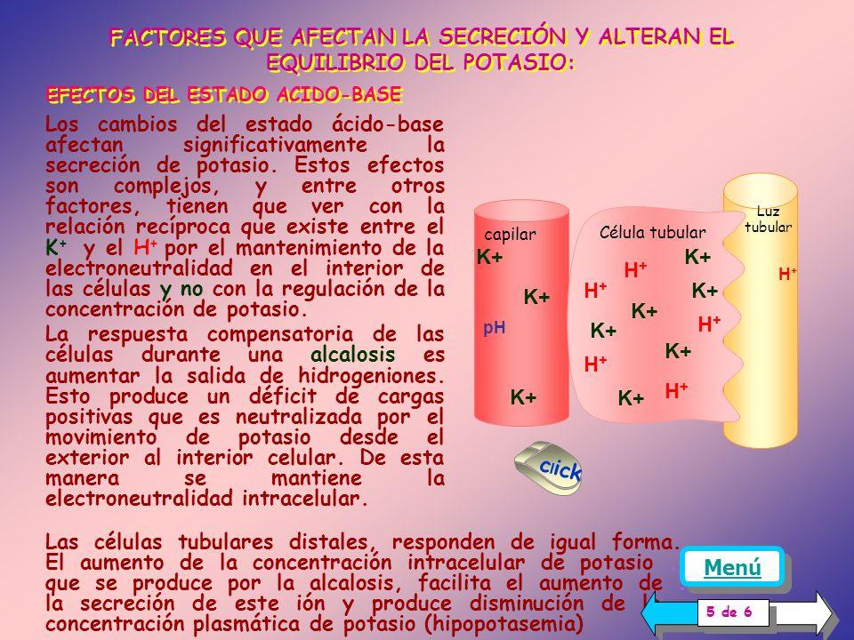 LA REABSORCION DE SODIO El aumento de la reabsorción de sodio, aumenta la secreción de potasio Explicación: El movimiento de sodio desde la luz al interior de la célula tubular, favorecido por el gradiente electroquímico, deja un déficit de cargas positivas en la luz, esto genera un potencial eléctrico negativo ( alrededor de -30 mV en comparación con el espacio intersticial), que favorece la secreción de potasio.