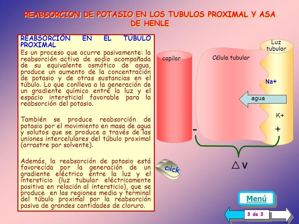 En la tabla se presenta el porcentaje aproximado de potasio que se reabsorbe en los distintos segmentos tubulares, se aprecia que más del 85 % de la reabsorción ocurre en el túbulo proximal y asa de Henle.