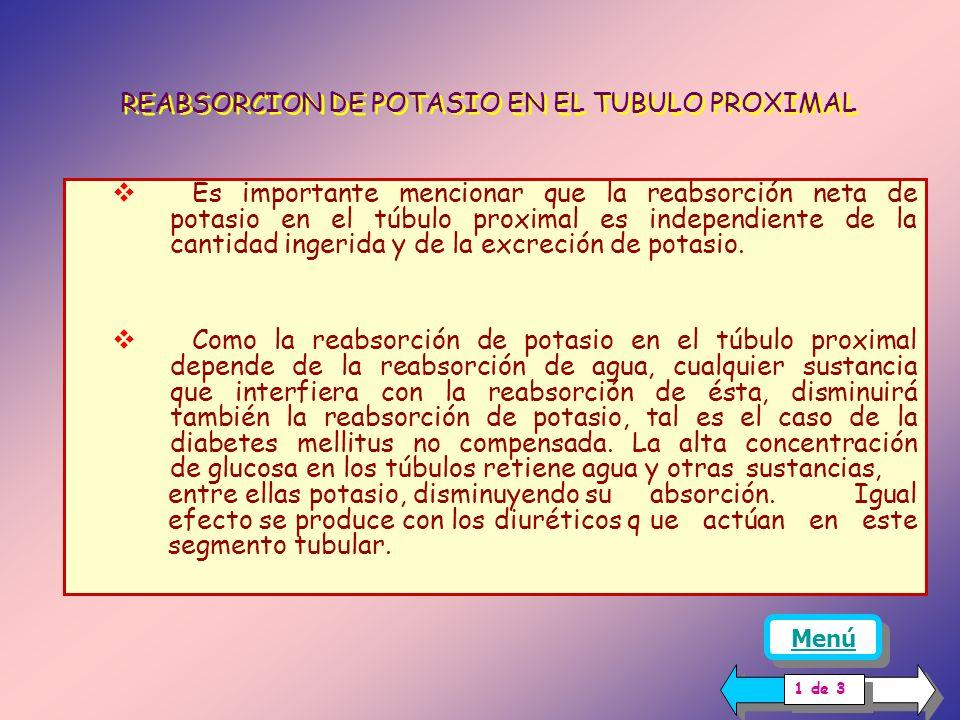 Luz tubular Célula tubular capilar REABSORCION DE POTASIO EN LOS TUBULOS PROXIMAL Y ASA DE HENLE REABSORCIÓN EN EL TÚBULO PROXIMAL Es un proceso que ocurre pasivamente: la reabsorción activa de sodio acompañada de su equivalente osmótico de agua, produce un aumento de la concentración de potasio y de otras sustancias en el túbulo.