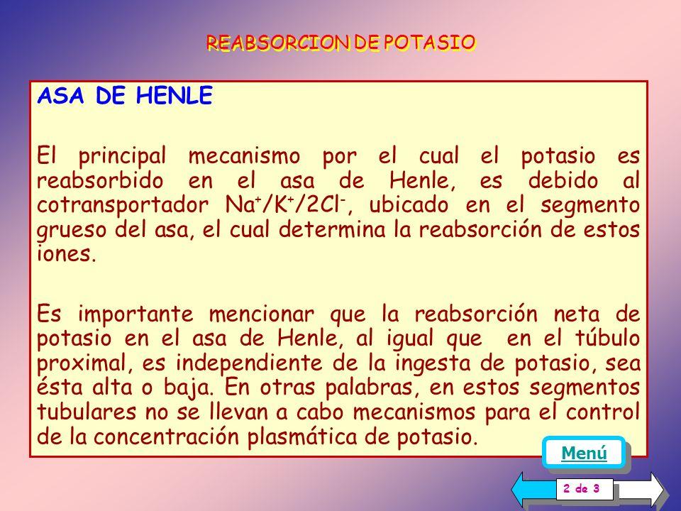 ASA DE HENLE El principal mecanismo por el cual el potasio es reabsorbido en el asa de Henle, es debido al cotransportador Na + /K + /2Cl -, ubicado en el segmento grueso del asa, el cual determina la reabsorción de estos iones.