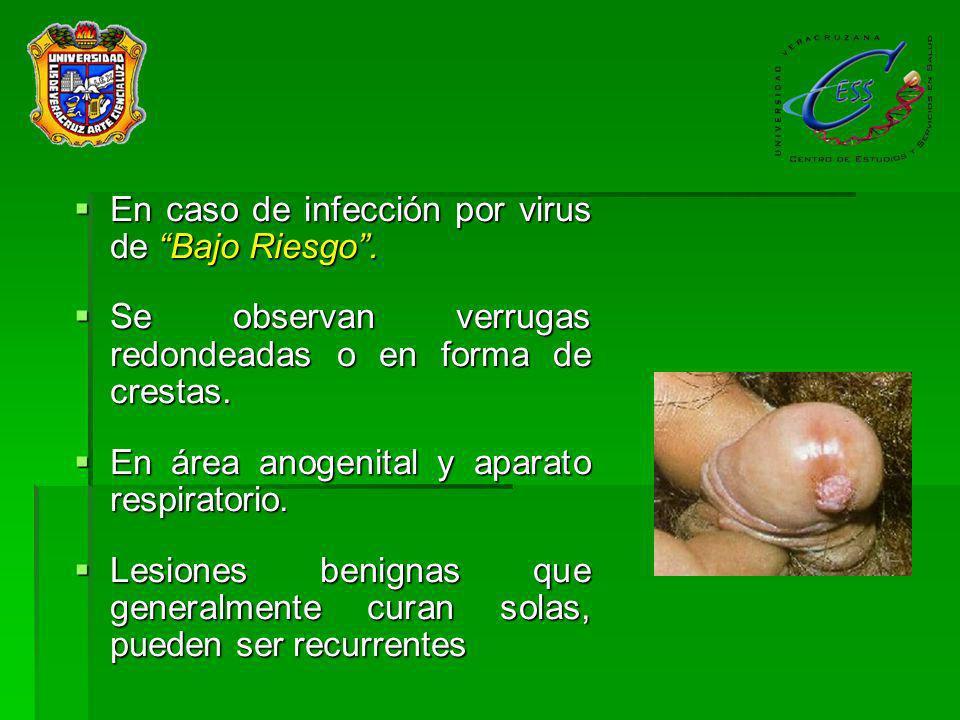 La enfermedad por virus de bajo riesgo (6 y 11 más comunes) se nota como formaciones verrugosas de superficie redondeada o con forma de crestas, las cuales pueden aparecer en vulva, vagina, pene, escroto, alrededor del ano.