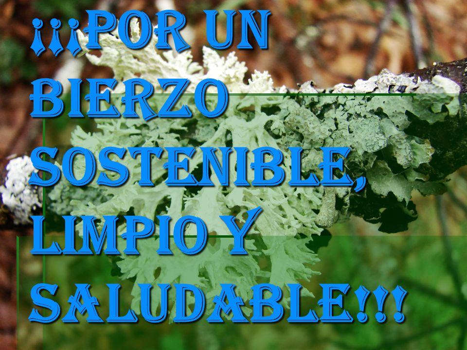 ¡¡¡POR UN BIERZO SOSTENIBLE, LIMPIO Y SALUDABLE!!!