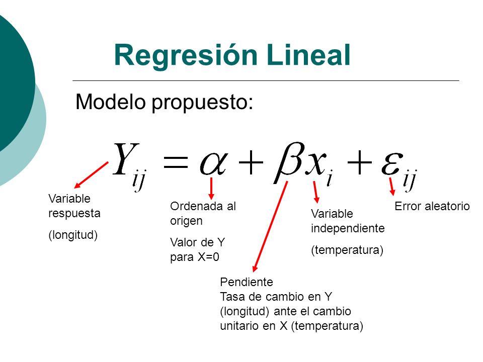 Regresión Lineal Modelo propuesto: Variable respuesta (longitud) Ordenada al origen Valor de Y para X=0 Pendiente Tasa de cambio en Y (longitud) ante