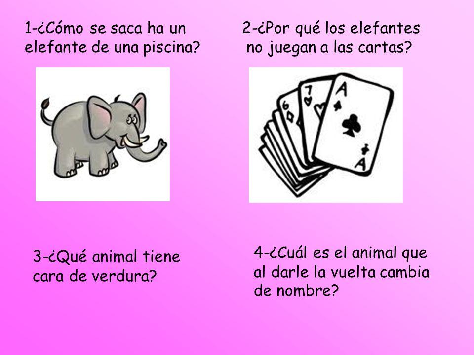 1-¿Cómo se saca ha un elefante de una piscina? 3-¿Qué animal tiene cara de verdura? 2-¿Por qué los elefantes no juegan a las cartas? 4-¿Cuál es el ani