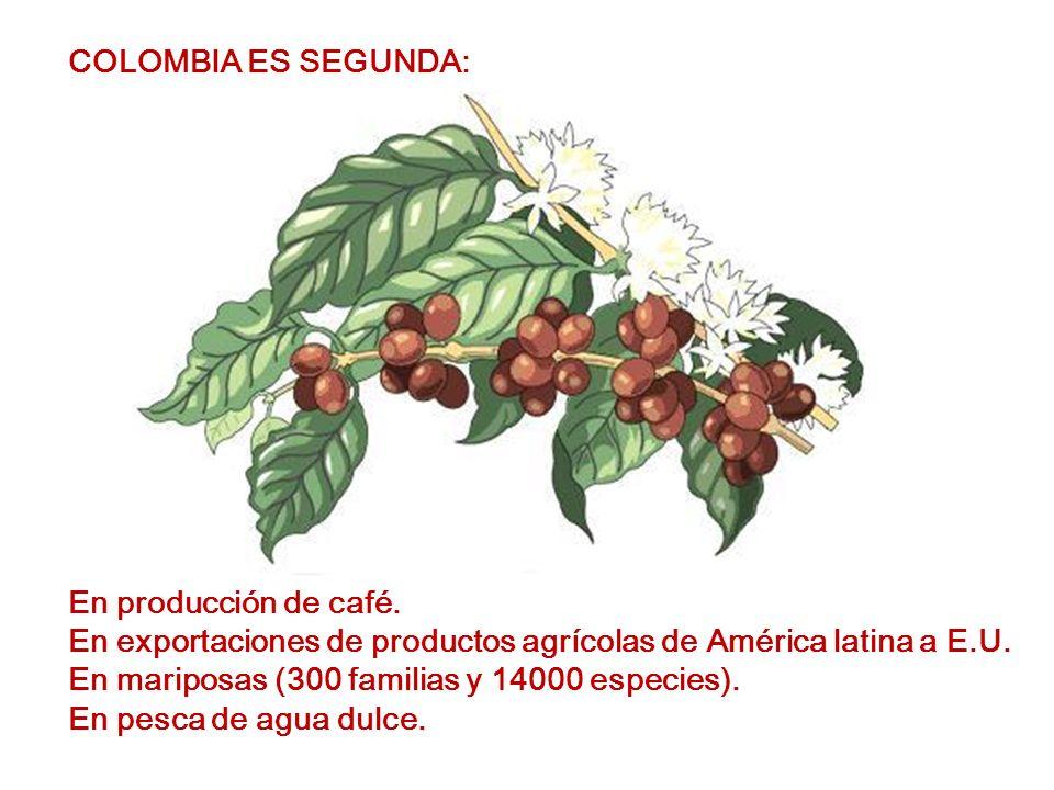 COLOMBIA ES SEGUNDA: En producción de café.