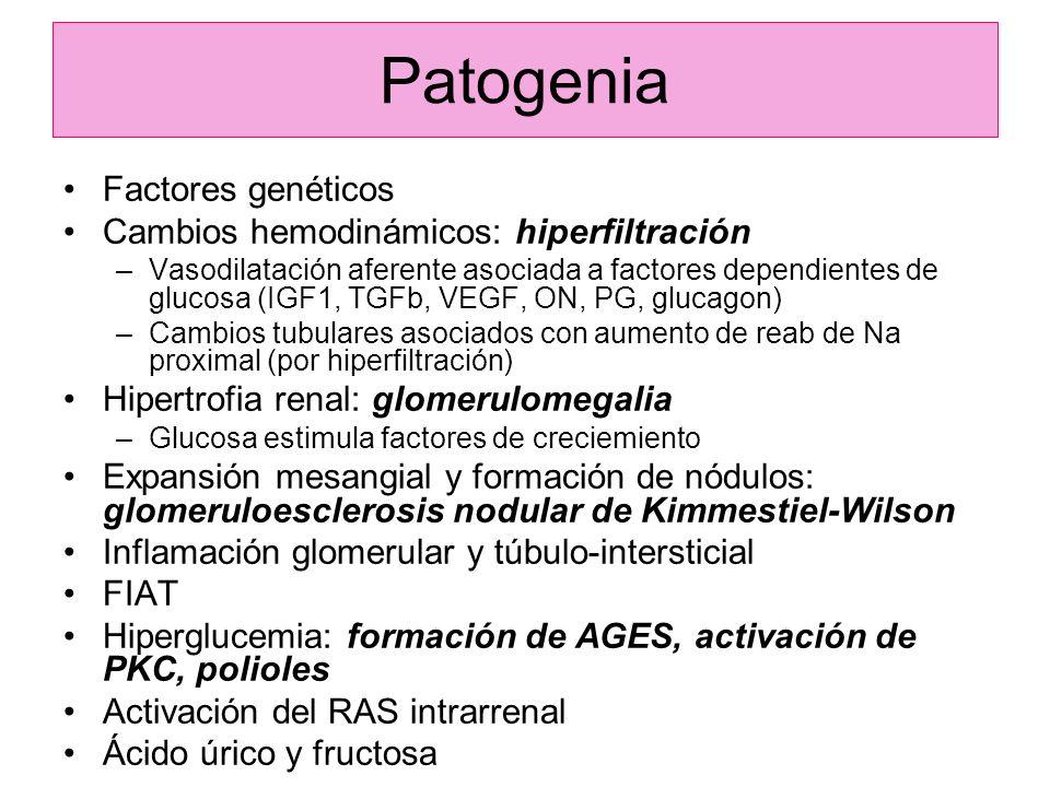 Patogenia Factores genéticos Cambios hemodinámicos: hiperfiltración –Vasodilatación aferente asociada a factores dependientes de glucosa (IGF1, TGFb,