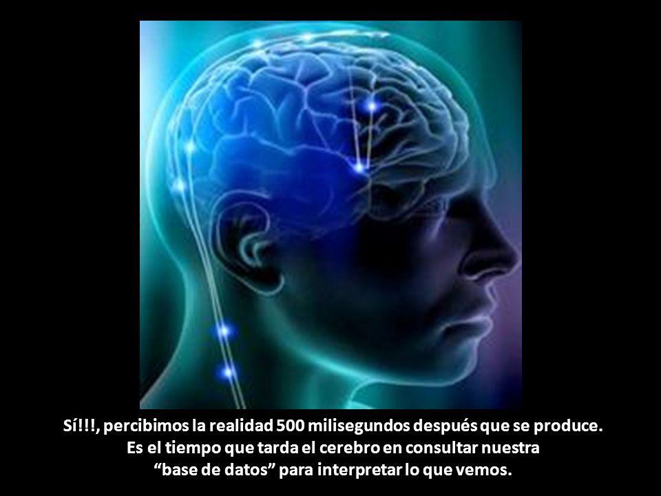 Primero está la entrada de datos a mis ojos, la señal se transmite al cerebro y luego (en exactamente 500 milisegundos) se produce un segundo colapso