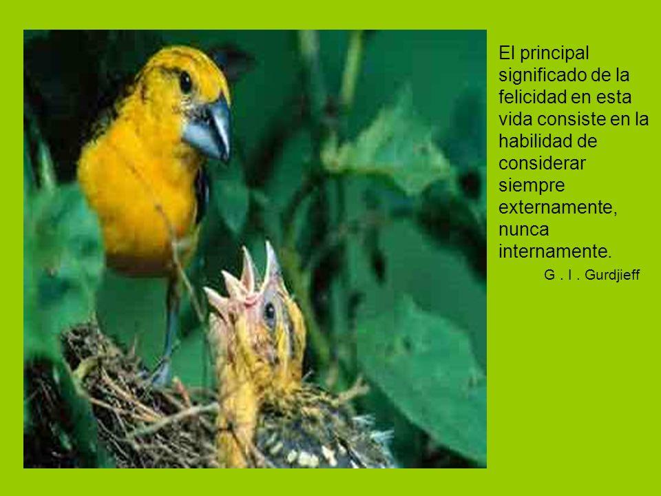 Una palabra debe ser vestida como una diosa y elevarse como un pájaro. - Sabiduría tibetana