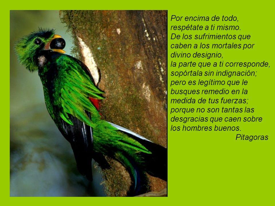 La alegría y el amor son las dos alas para las grandes acciones Goethe