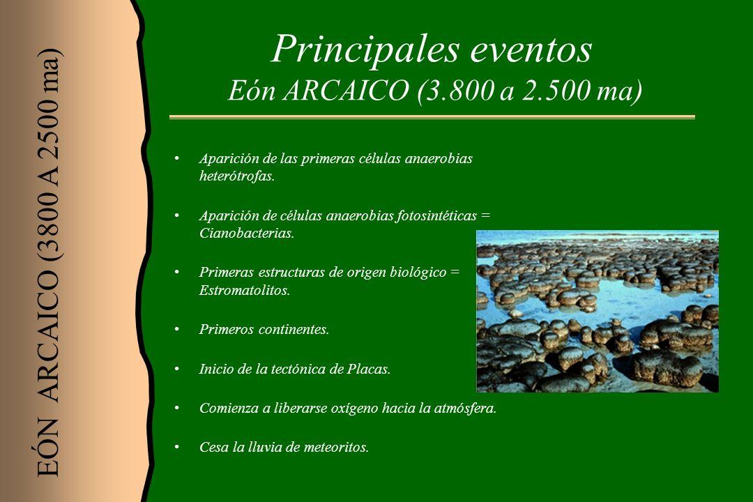 Principales eventos Eón ARCAICO (3.800 a 2.500 ma) Aparición de las primeras células anaerobias heterótrofas. Aparición de células anaerobias fotosint
