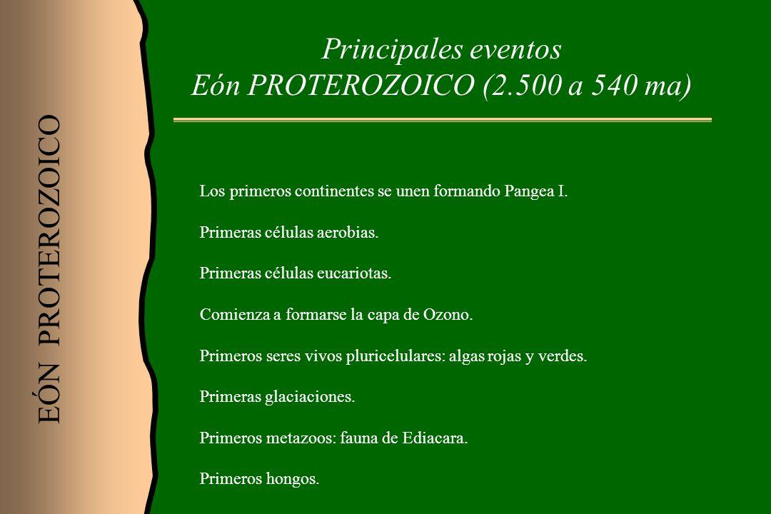 Principales eventos Eón PROTEROZOICO (2.500 a 540 ma) EÓN PROTEROZOICO Los primeros continentes se unen formando Pangea I. Primeras células aerobias.